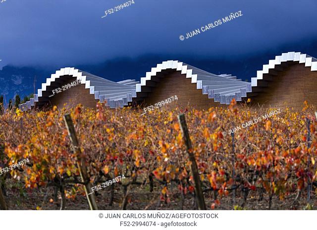 Ysios Winery, Vineyard in autumn, La Rioja, Alava, Basque Country, Spain, Europe