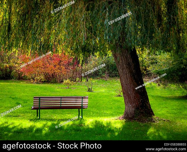 Bench under the twigs of a willow tree
