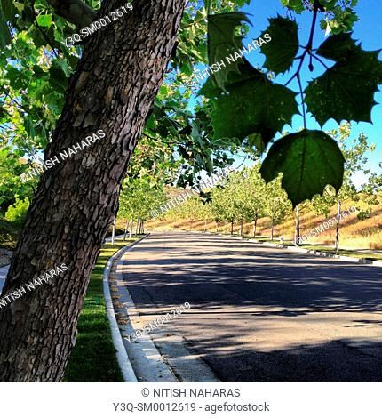 A curbside afternoon in San Ramon, California, USA