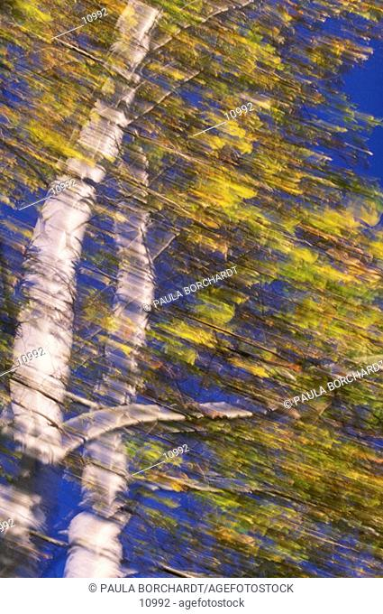 Blurred tree with fall foliage
