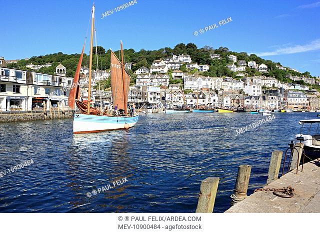 Traditional Lugger Boat. sails out of the harbour - fishing village - Looe, Cornwall, UK