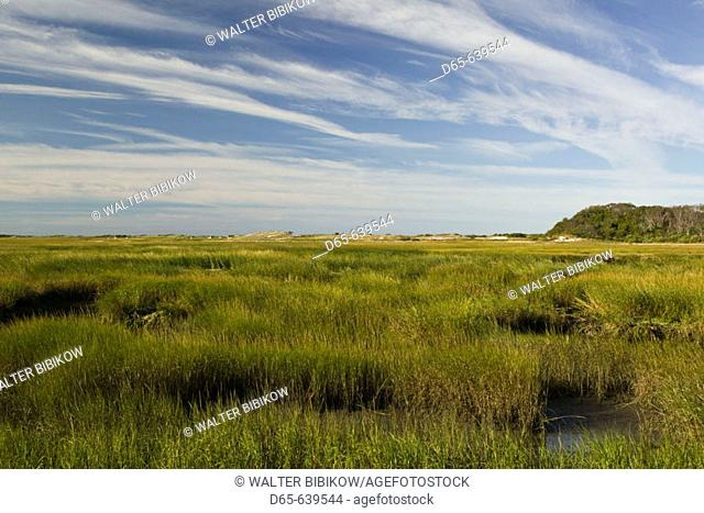 Provincelands Marshlands. Morning. Provincetown. Cape Cod. Massachusetts. USA