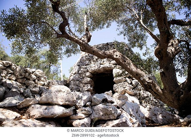 The Pajare, typical stone building for animal shelter, in Salento Puglia Italy