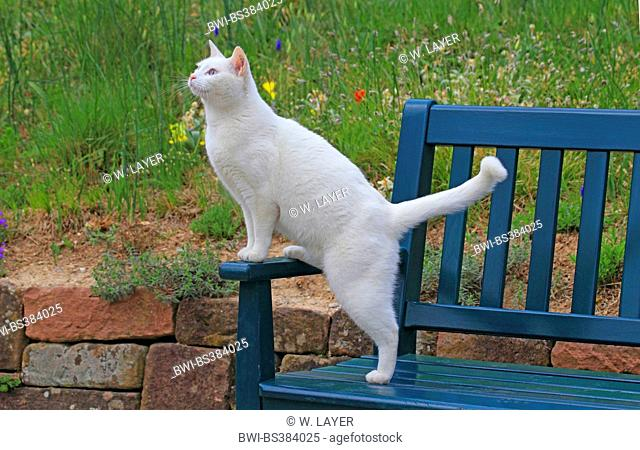 Pleasing Cat On A Garden Bench Stock Photos And Images Age Fotostock Inzonedesignstudio Interior Chair Design Inzonedesignstudiocom