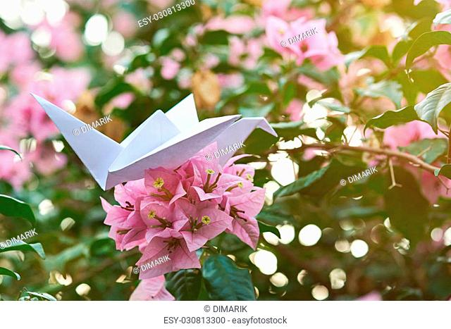 Origami Art on View at Yume Japanese Gardens | The Range: The ... | 467x640