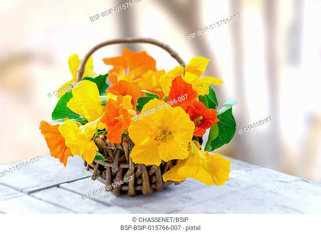 Basket of Nasturtium plant with yellow and orange flowers