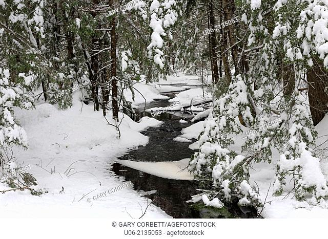 A brook with snow and ice on the trees in the winter season in Canada
