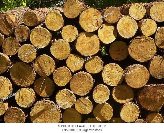 Poland. Podlasie region. Wood