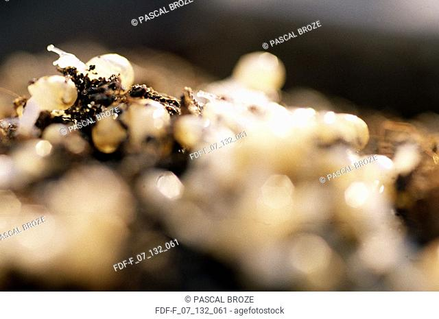 Close-up of snails on a heap of eggs