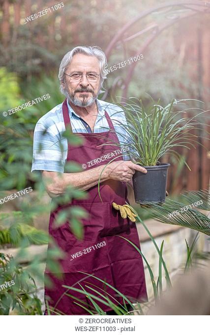 Elderly gardener working in garden centre holding a plant