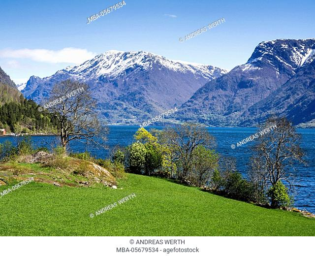 View over meadows and trees towards the Lustrafjord, the inner branch of the Sognefjord, near Solvorn located on the left side of the bay, Solvorn, Sognefjord
