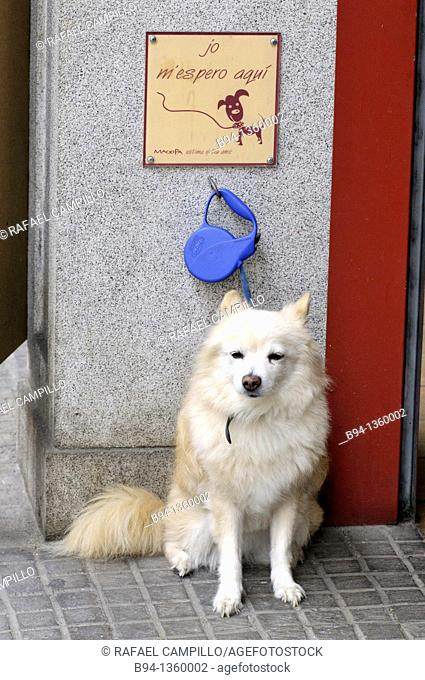 Chained dog waiting outside a bakery