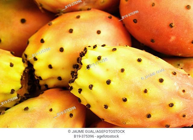 Prickly Pears. Majorca, Balearic Islands. Spain