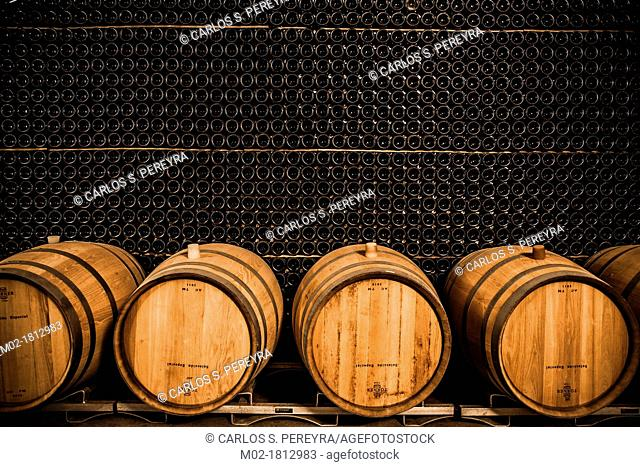 Winemaking in the largest wine region of Catalonia, the Penedes  Barcelona, Spain