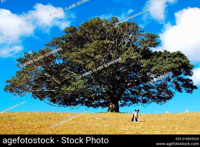 oscar mit lieblingsbaum
