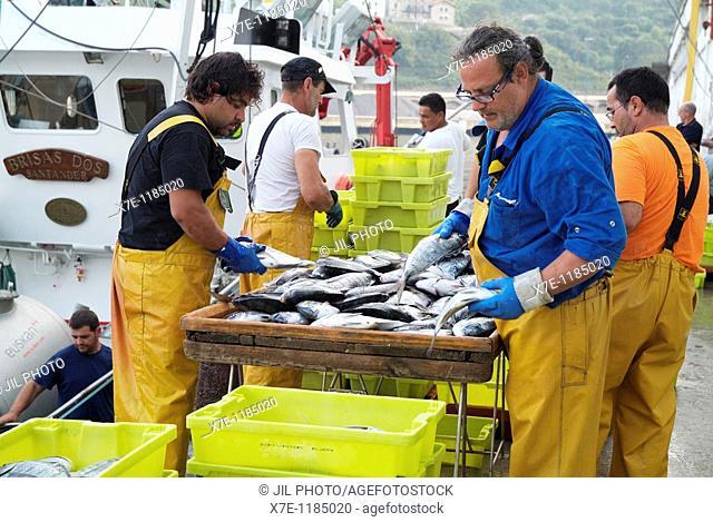 Downloading bream in the port of Pasajes  Pasai San Pedro  Guipuzcoa  Spain