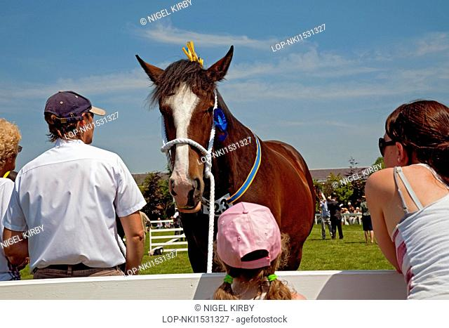 England, North Yorkshire, Harrogate. People looking at a shire horse at the Great Yorkshire Show