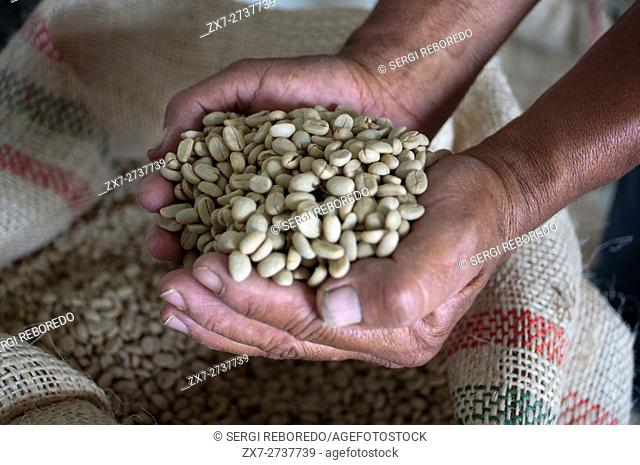 Dried coffee beans ready for roasting at Hacienda San Alberto. Buenavista town, Quindio, Colombia. Colombian coffee growing axis