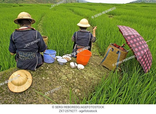 Some Hmong women eating next to a rice field in Sapa way to the nearby villages of Lao Chai and Ta Van. Vietnam
