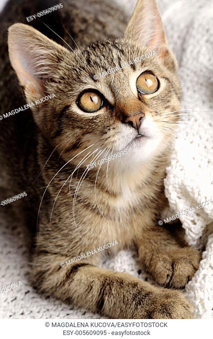 close-up of curious cat