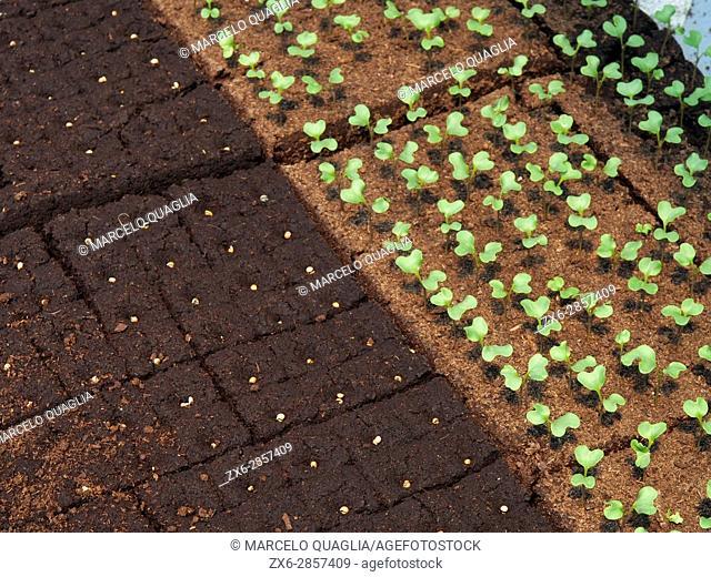 Seedbeds at Ecocaracol organic farmhouse. Venta Las Ranas village, Villaviciosa village council. Asturias autonomous community. Spain