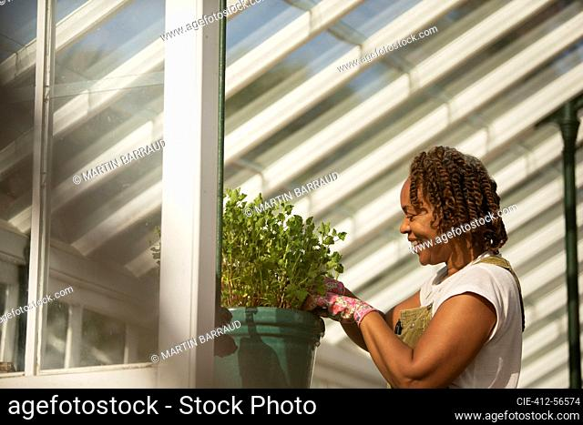Female garden shop owner pruning potted plant in greenhouse