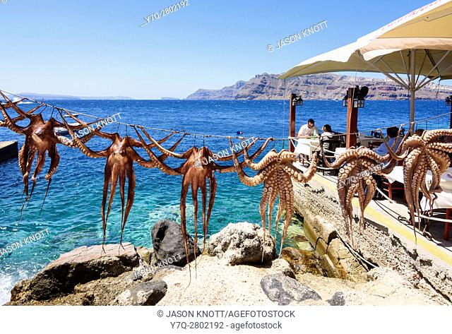 Octopuses hanging on a line outside a seafront taverna in Ammoudi, Santorini, Cyclades, Greece