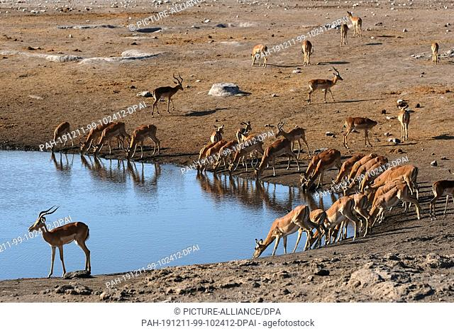 28 November 2019, Namibia, Etosha-Nationalpark: Antelopes drink in Etosha National Park at a waterhole. Photo: Oliver Berg/dpa