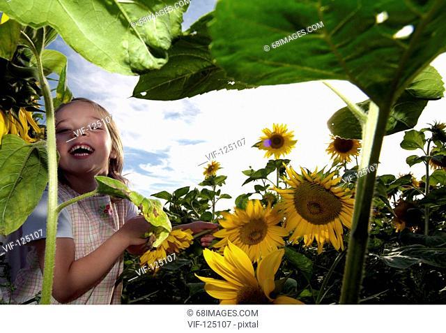 Sommer - kleines Maedchen spielt und tobt im Sonnenblumenfeld - Hamburg, GERMANY, 01/01/2005