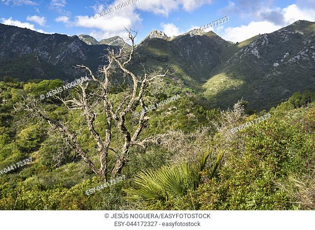 Sierra Blanca. Striations with the Sierra de las Nieves National Park, Malaga. Spain