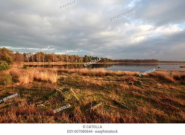 lake and swamps in Dwingelderveld at sunset