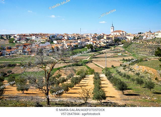 Overview and olive grove. Colmenar de Oreja, Madrid province, Spain