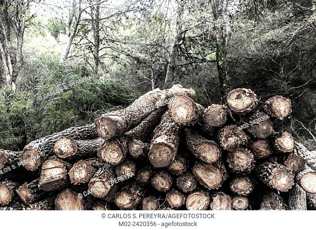 Logging. Tree trunks ready for transport. Andalusia, Spain