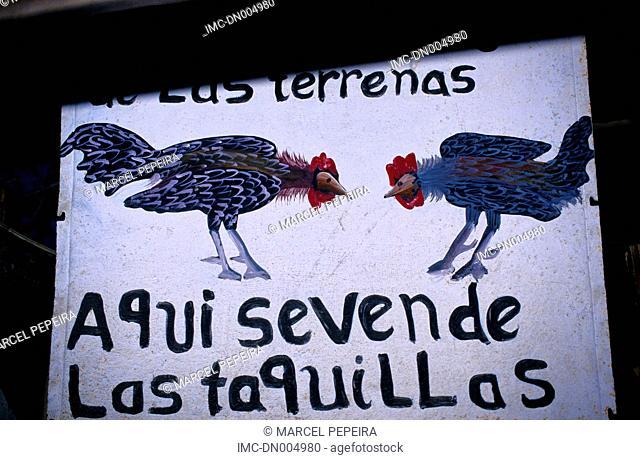 Dominican republic, Las Terranas, fighting roosters