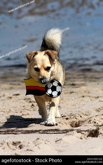 Tierischer Fussballfan