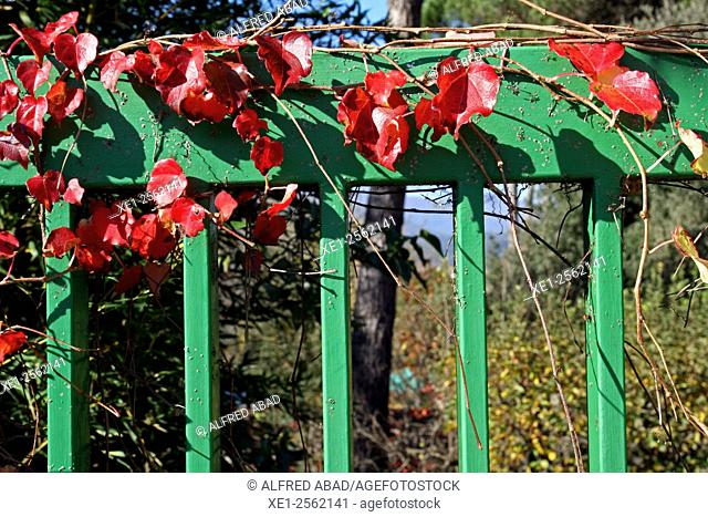 Red ivy on green fence