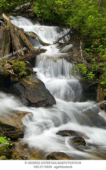 Waterfall on Torino Creek along Cliff Lake Trail, Lolo National Forest, Montana