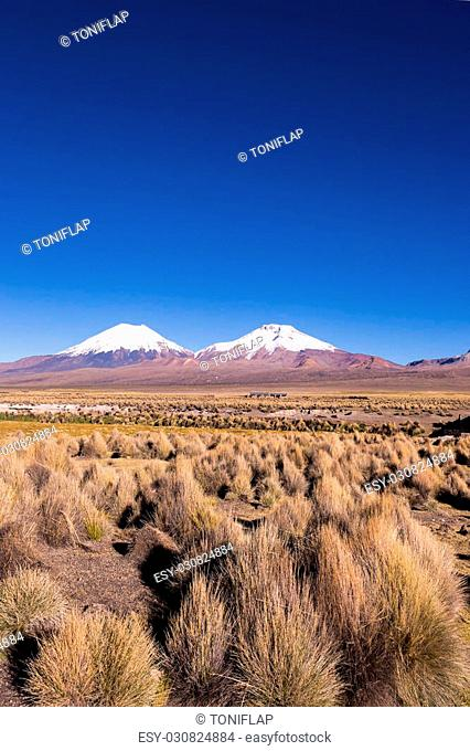 Parinacota and Pomerade volcanos. High Andean landscape in the Andes. High Andean tundra landscape in the mountains of the Andes