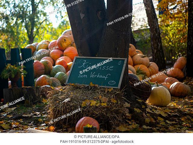 15 October 2019, Brandenburg, Lübbenau/Spreewald: Numerous pumpkins are offered for sale on a property between Lübbenau and Lehde in the Spreewald