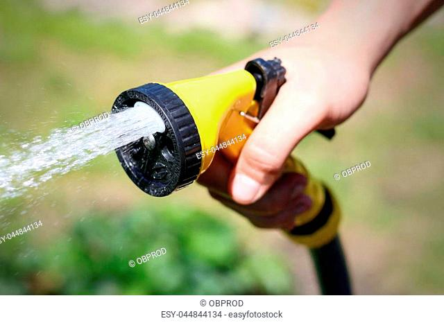 Male hand watering a green plant with water from the hose. Watering hose. Closeup