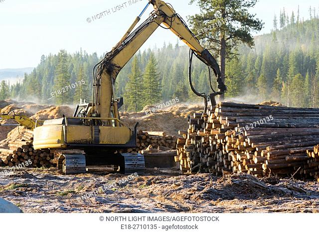 Canada, BC, Cranbrook. Heavy equipment sorting large pile of logs beside highway in logging clearcut