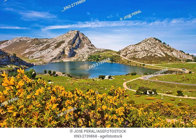 Enol Lake, The Lakes of Covadonga, Cangas de Onis Council, Peaks of Europe, Picos de Europa National Park, Asturias, Spain, Europe