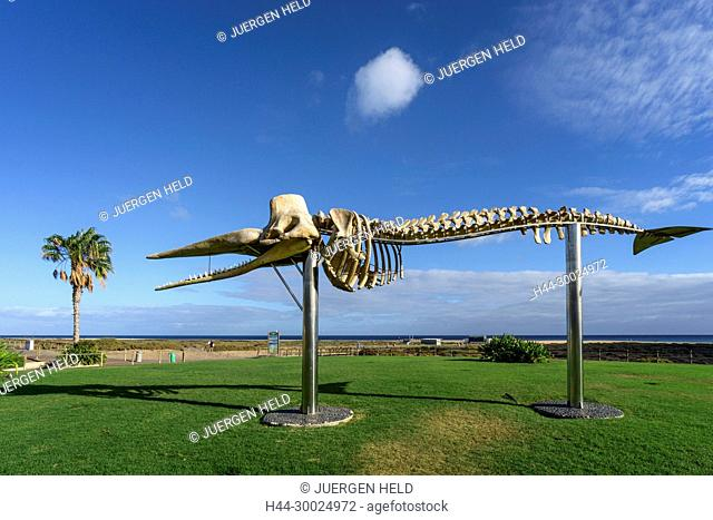 Whale skeleton, Morro Jable, Jandia, Fuerteventura, Canary Islands, Spain
