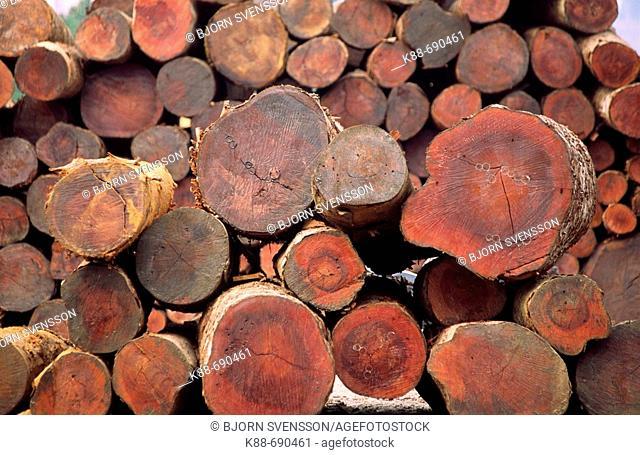 Teak logs at a lumber yard in Daluo, near the Burmese border, Xishuangbanna, Yunnan, China