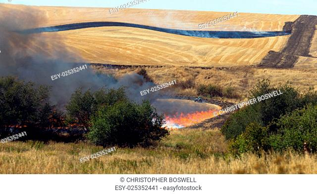 Farmers do a controlled burn before plowing after harvest