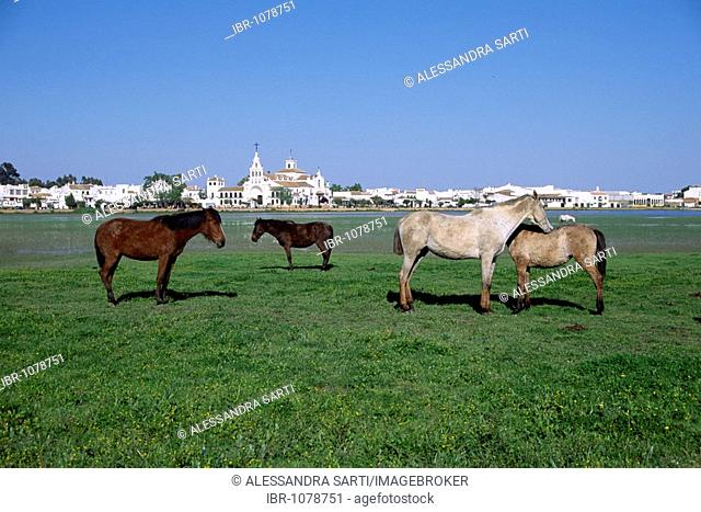 Andalusian horses in the wild, in front of the village El Rocio, Donana National Park, Andalusia, Spain, Europe