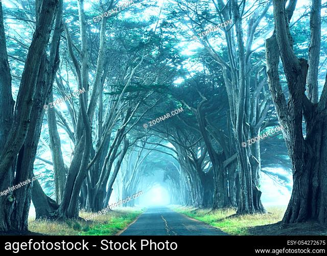 Misty trees alley in foggy weather