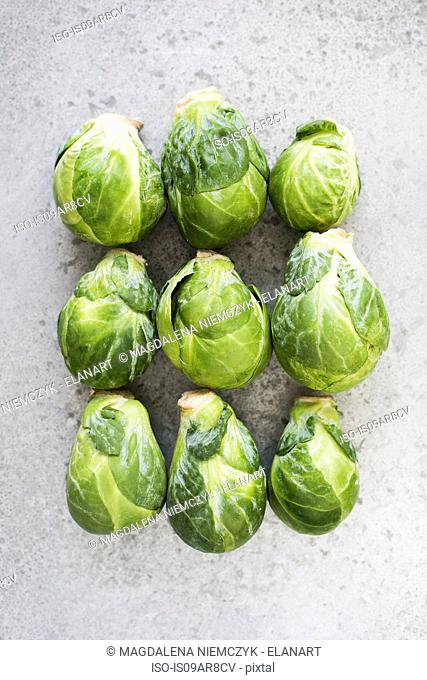 Brussel sprouts in rows, close-up