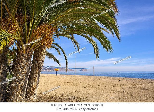 Altea beach Playa La Roda palm trees in Alicante of Spain