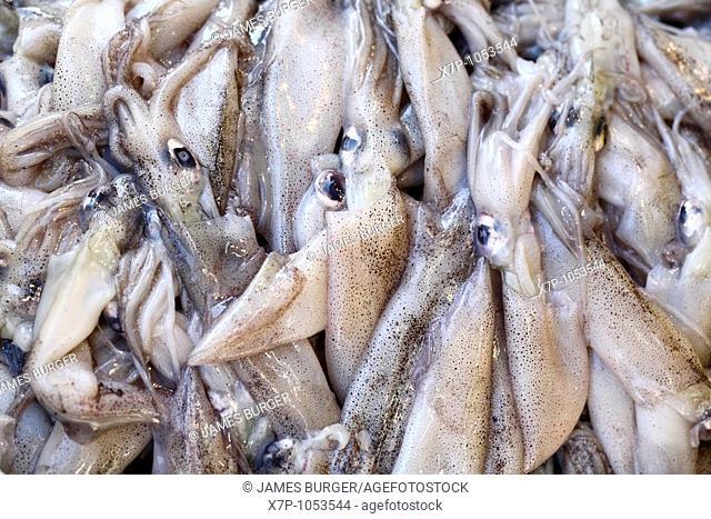 Close up of fresh squid